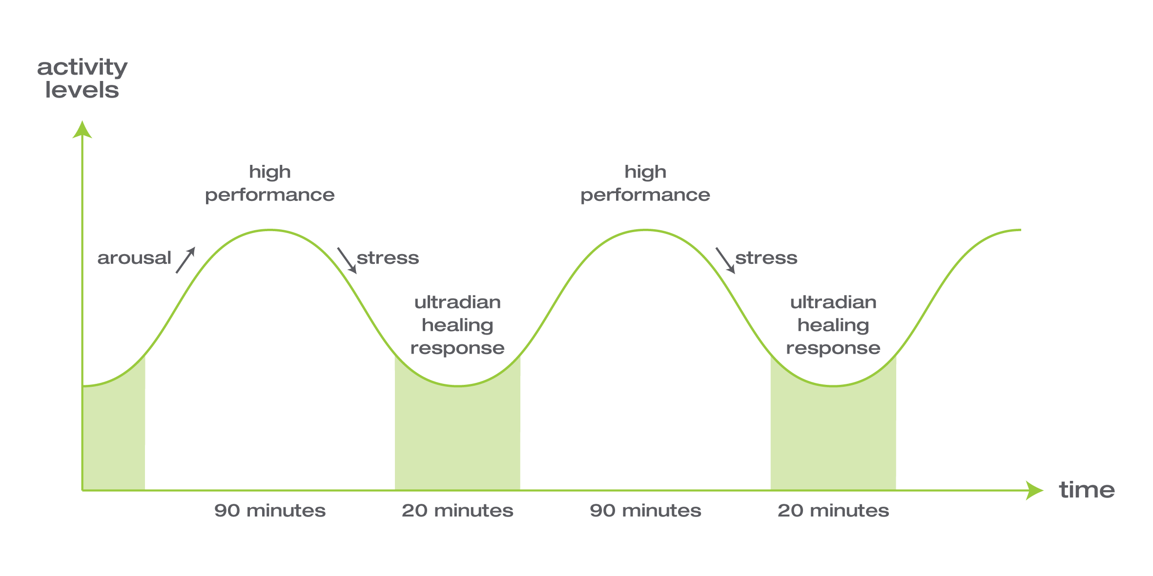 ultradian performance rhythm